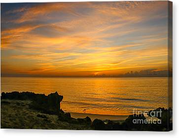 Wading In Golden Waters Canvas Print by Tom Claud