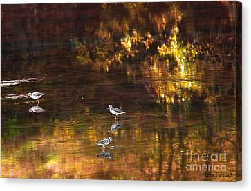 Wading In Light Canvas Print by Steve Warnstaff