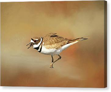 Wading Killdeer Canvas Print by Donna Kennedy