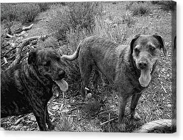 Wagging Tongues Canvas Print by Donna Blackhall