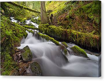 Wahkeena Creek In Green Canvas Print by David Gn