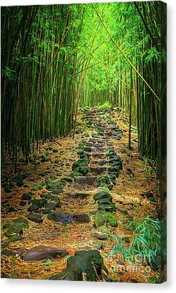 Lush Colors Canvas Print - Waimoku Bamboo Forest #2 by Inge Johnsson