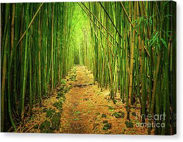 Waimoku Bamboo Forest Canvas Print by Inge Johnsson