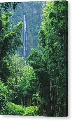 Waimoku Falls Canvas Print by Dave Fleetham - Printscapes