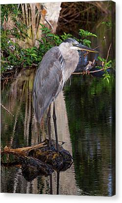 Waiting For Breakfast Canvas Print by Lamarre Labadie