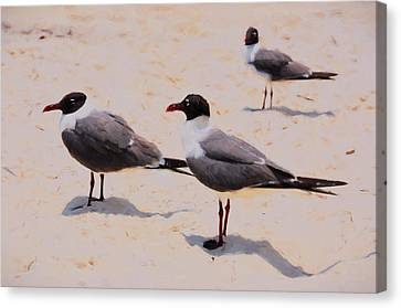 Canvas Print featuring the photograph Waiting For Handouts by Jan Amiss Photography