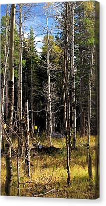 Waiting For Snow Sierra Nevada Autumn Larry Darnell Canvas Print by Larry Darnell