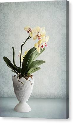 Waiting For Spring Canvas Print by Maggie Terlecki
