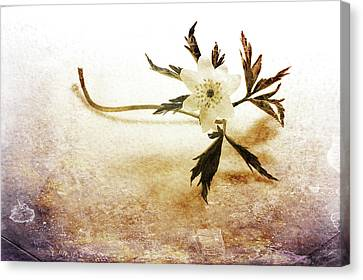 Waiting For Spring Canvas Print by Randi Grace Nilsberg