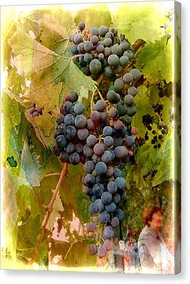 Waiting For Wine Canvas Print by Dorothy Berry-Lound