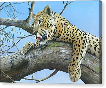 Waiting Game Canvas Print by Mike Brown