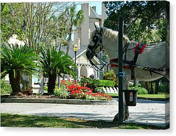 Waiting Horse Canvas Print by Bruce Gourley