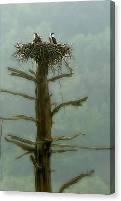 Canvas Print - Waiting In The Nest For Dinner by Dan Friend