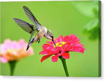 Canvas Print featuring the photograph Waiting In The Wings by Christina Rollo