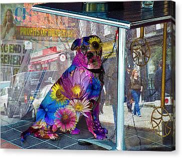 Waiting Canvas Print by Judi Saunders