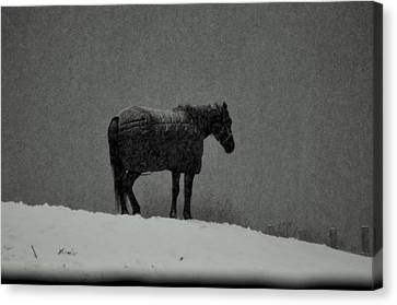 Waiting Out The Storm Canvas Print