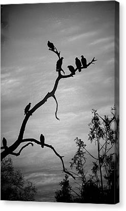 Waiting Canvas Print by Robert Meanor