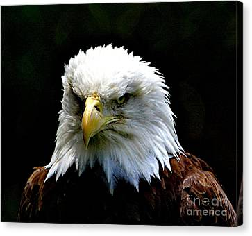Wake Up America Canvas Print by Robert Pearson