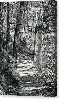 Walden Woods Canvas Print by Peter Schnabel