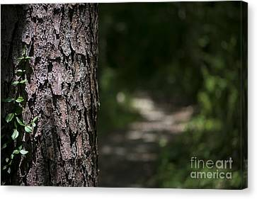 Walk In The Woods Canvas Print by Andrea Silies
