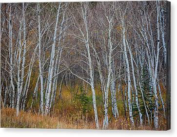 Canvas Print featuring the photograph Walk In The Woods by James BO Insogna