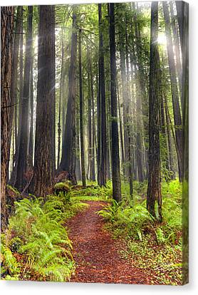 Sun Rays Canvas Print - Walk In The Woods by Leland D Howard