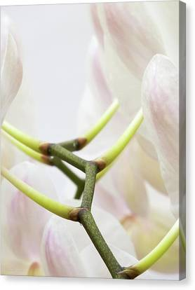 Walk The Orchid Canvas Print by Wim Lanclus