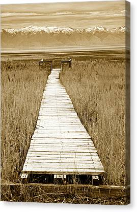 Walk With Me 1 Canvas Print by Marilyn Hunt
