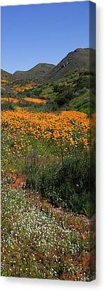 Canvas Print featuring the photograph Walker Canyon Poppies by Cliff Wassmann