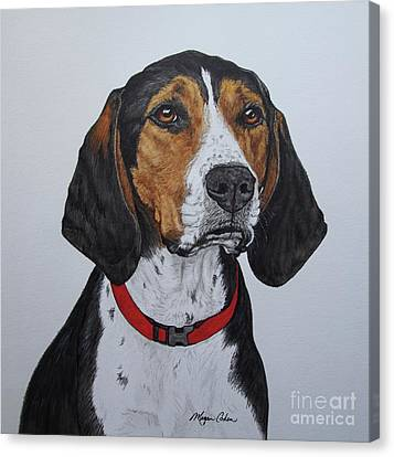 Walker Coonhound - Cooper Canvas Print