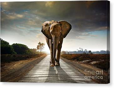 Walking Elephant Canvas Print