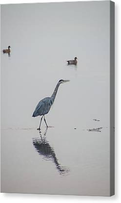 Walking In Calm Waters Canvas Print