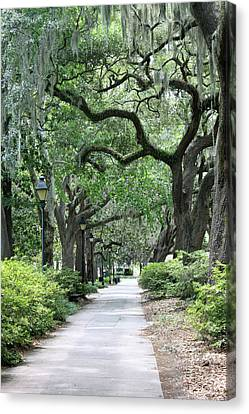 Walking In The Park Canvas Print by Suzanne Gaff