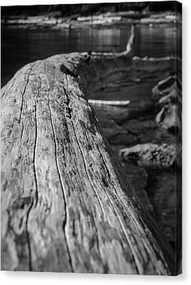 Walking On A Log Canvas Print