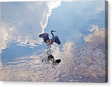 Walking On Water Canvas Print by Carolyn Marshall