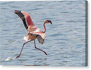 Walking On Water Canvas Print by Pravine Chester