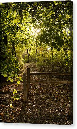 Walking Path Canvas Print