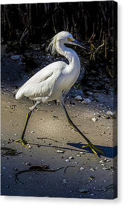 Walking Tall Canvas Print by Marvin Spates