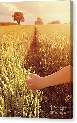 Canvas Print featuring the photograph Walking Through Wheat Field by Lyn Randle