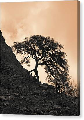 Canvas Print featuring the photograph Walking Tree by Ron Dubin