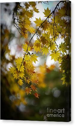 Walks In The Autumn Garden Canvas Print by Mike Reid