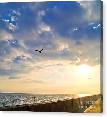 Flying Gull Canvas Print - Walkway Along Oceanfront by David Buffington