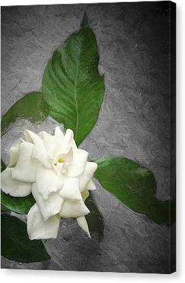 Canvas Print featuring the photograph Wall Flower by Carolyn Marshall
