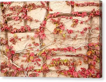 Canvas Print - Wall Of Vines by Sheri Van Wert