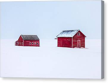 Walled In White Canvas Print by Todd Klassy