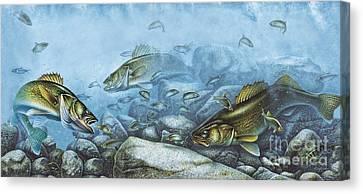 Walleye Reef Canvas Print by JQ Licensing