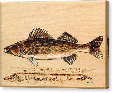 Walleye Canvas Print by Ron Haist