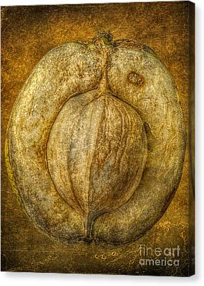 Walnut Texture Macro Stil Life Canvas Print by Randy Steele