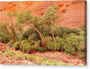 Canvas Print featuring the photograph Walpa Gorge 03 by Werner Padarin