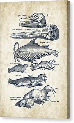 Walrus And Dolphins Historiae Naturalis 08 - 1657 - 43 Canvas Print by Aged Pixel